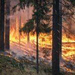 :HELLE: Metsäpalojen suurin riskiaika on juuri nyt